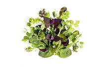 Organic Green Spring Mix Salad